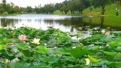 ভোলার প্রাকৃতিক সৌন্দর্য্যতম দর্শণীয় স্থান মনপুরা দ্বীপ