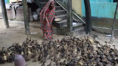 ছাতকে রোপেজুন নেছা হাঁসের হ্যাচারীতে স্বাবলম্বী