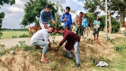 মাধবপুর উপজেলা কৃষকলীগের বৃক্ষরোপণ কর্মসূচি