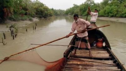 সুন্দরবনে নিষিদ্ধ এলাকায় চলছে অবৈধভাবে মাছ শিকার