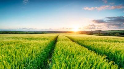 জৈব প্রযুক্তি ও কৃষির উন্নয়ন : প্রেক্ষিত বাংলাদেশ