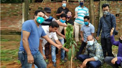হাটহাজারীতে ইউএনও রুহুল আমিনের উদ্যোগে চারা রোপন