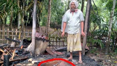 কালীগঞ্জে বজ্রপাতে গর্ভবতী গাভী পুড়ে ছাই,  কৃষকের আহাজারি