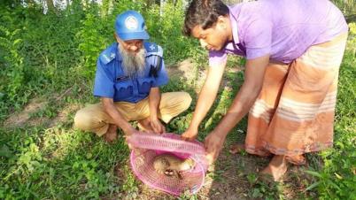 লোকালয়ে মেছোবাঘ, অবমুক্ত করা হলো কবরস্থানে