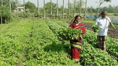 সুন্দরগঞ্জে করোনায় সবজি চাহিদা মিটাতে রাজেনার সাফল্য