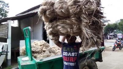 ঠাকুরগাঁওয়ে পাটের দাম ভাল পেয়ে কৃষকের মুখে হাসি