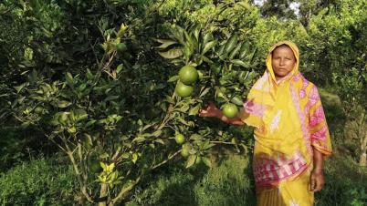 মাধবপুরে মালটা চাষে সফল নারী চাষী দিলরুবা খাতুন