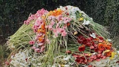 করোনার মধ্যে পহেলা বৈশাখ, ব্যাপক ক্ষতির মুখে মাগুরার ফুল চাষীরা
