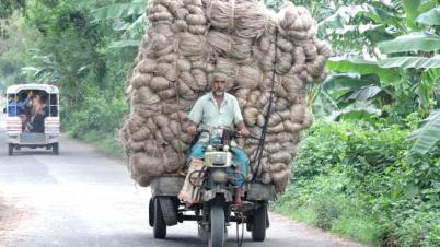 বাগমারায় পাটের দাম বেশি হওয়ায় কৃষকরা খুশি