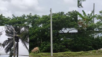 কলাপাড়ায় পল্লী বিদ্যুতের খুটি আছে বিদ্যুৎ নেই, ভোগান্তিতে মানুষ