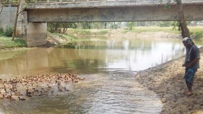 নওগাঁর ধামইরহাটে জীবিকার উৎস এখন খালের পানি