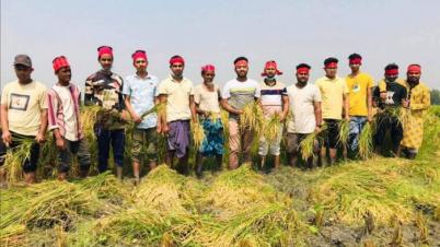 কৃষকের পাশে নরসিংদী সদর থানার ছাত্রলীগ