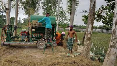 আউশধানে বাম্পার ফলনে কৃষকের মুখে হাসি