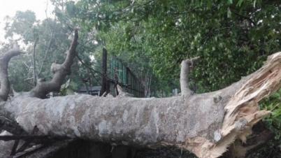 জয়পুরহাটে ঝড়-বজ্রপাতে নিহত-৭, লণ্ডভণ্ড ৪০ গ্রাম